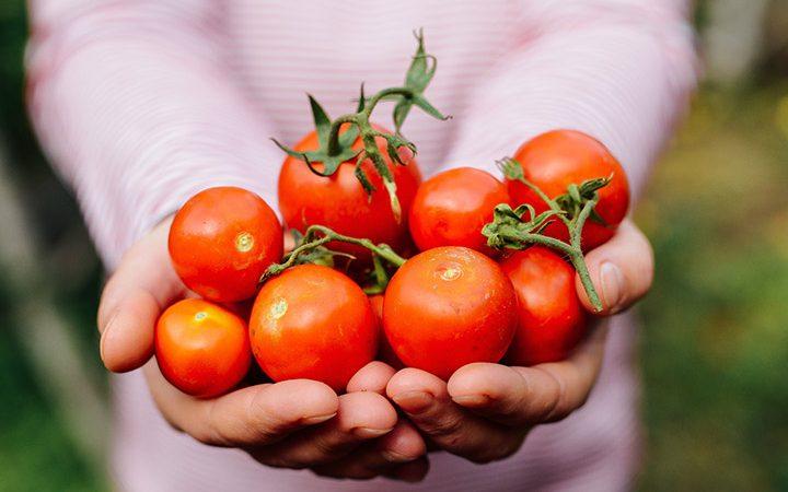 گوجه فرنگی برای لاغری