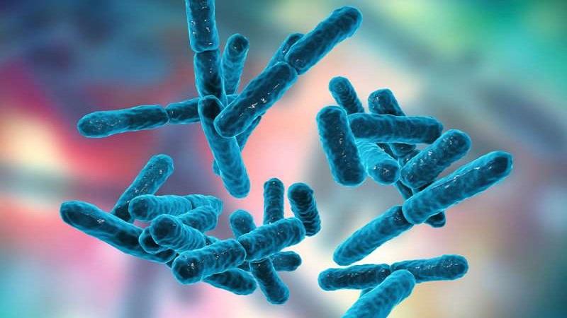 منابع غذایی حاوی باکتری پروبیوتیک کدامند ؟